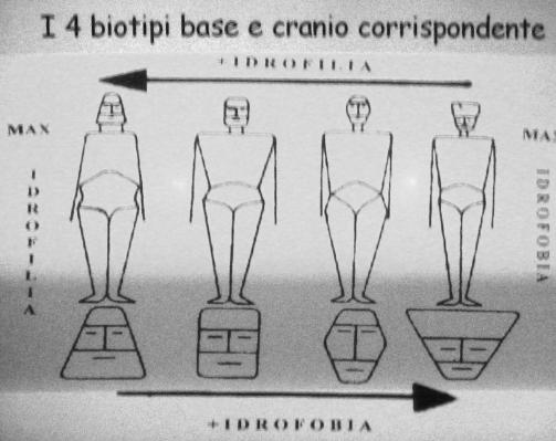 I 4 biotipi base e cranio corrispondente